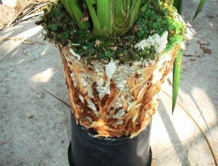 Planterbag 20 Liter Putih fytocell lightweight substrate 150 liter bag webshop plantwall plantwall co uk