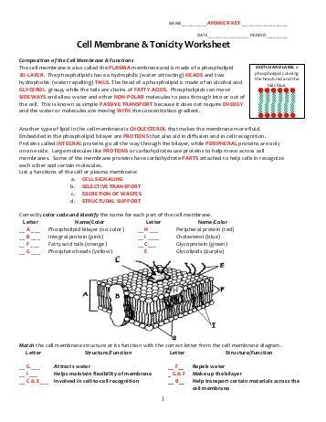 Cell Membrane Tonicity Worksheet 100 free magazines from copley fairlawn org