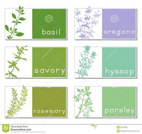 plant tag template etiquetas intituladas ervas ilustra 231 227 o do vetor