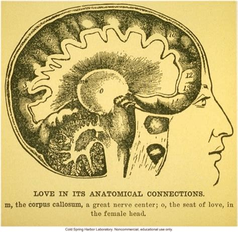 libro i love science a love in its anatomical connections bioephemera