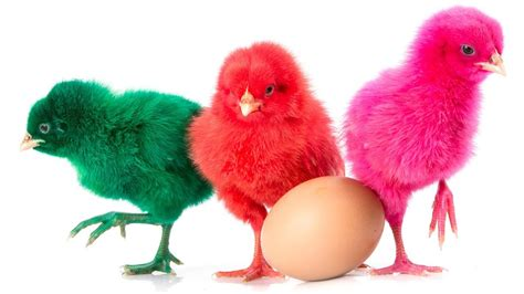 colorful baby learn colors with colorful baby chicken eggs