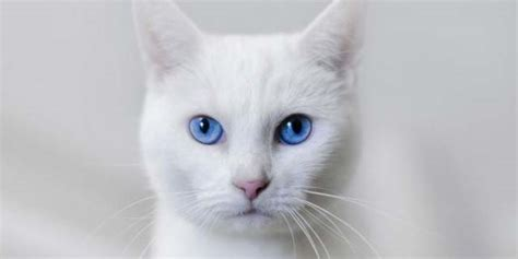 white names white cat names 75 awesome names for your white cat