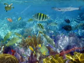 48 Computer Desk Caribbean Reef Tropical Fishes Underwater Stock Photo