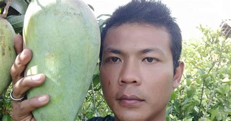 Jual Bibit Mangga Kio Bekasi dhelta jual bibit buah mangga kio
