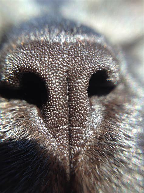 cat nose file cat nose jpg