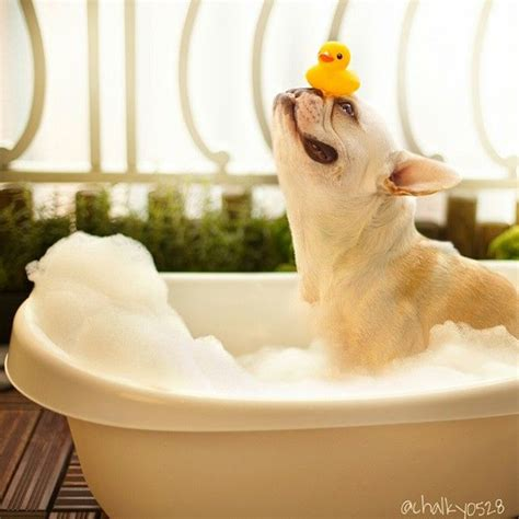 dog in a bathtub how to pet proof your decor by kimberly duran the oak
