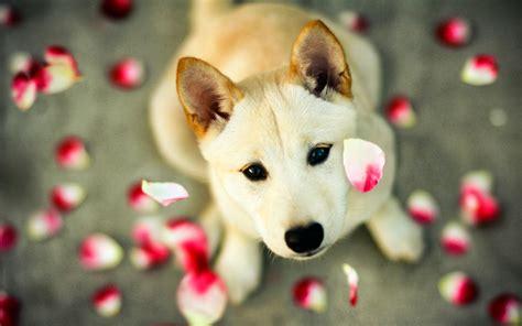wallpaper anjing lucu deloiz wallpaper