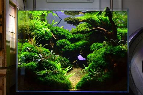 planted aquarium aquascaping simonsaquascapeblog favourites display tank at exotic