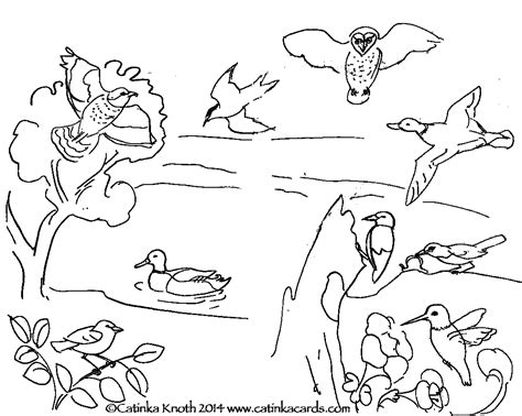 migratory birds coloring pages c knotes