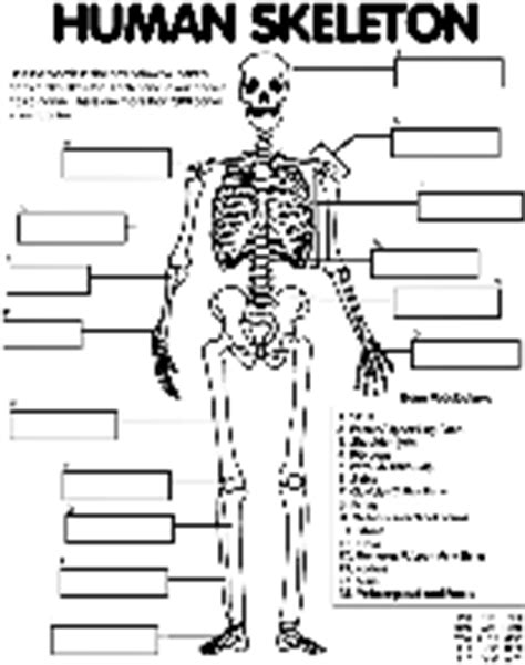 crayola coloring pages human skeleton colouring pages crayola ca