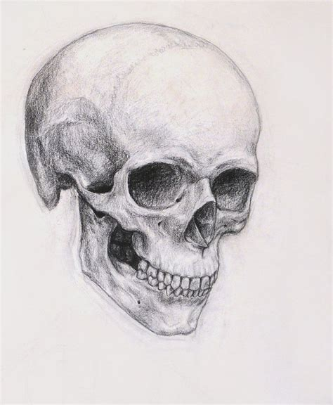 picture drawing a beautiful skull sketch pinteres