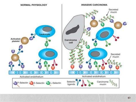 protein n glycosylation protein glycosylation and its associated disorders