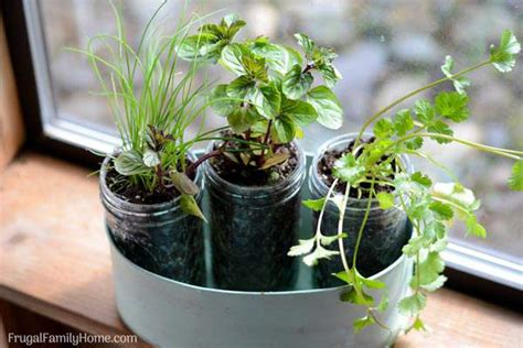 Window Sill Herbs Designs 10 Gift Ideas From The Garden