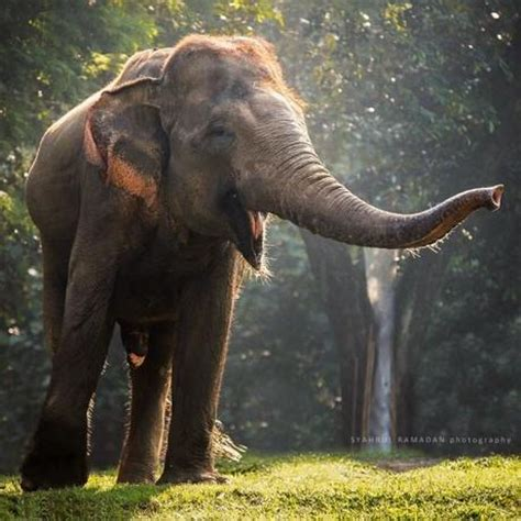 beautiful elephant photography paperblog
