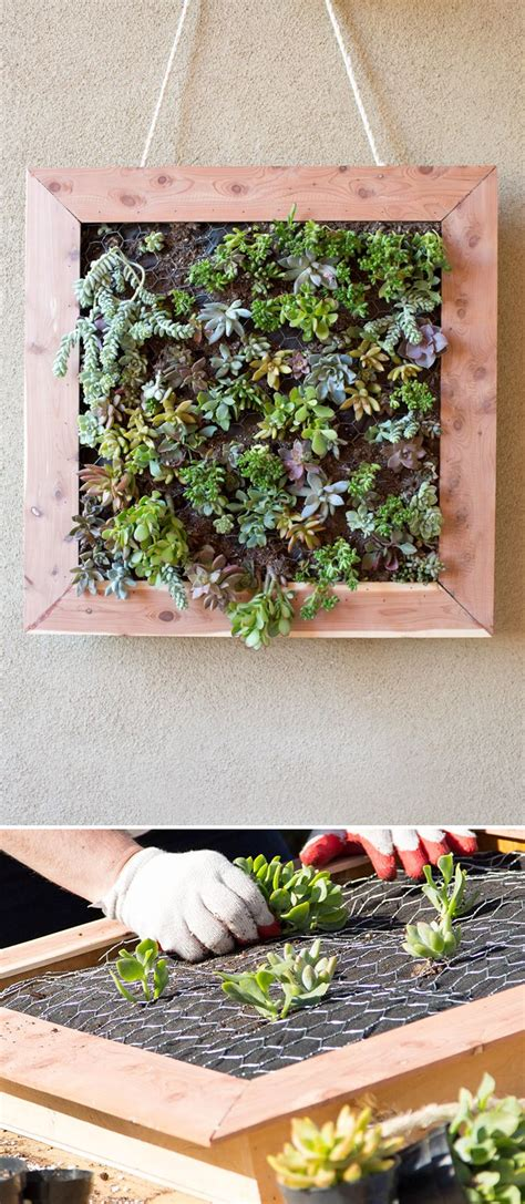 Vertical Garden Home Depot 25 Best Ideas About Succulent Wall On