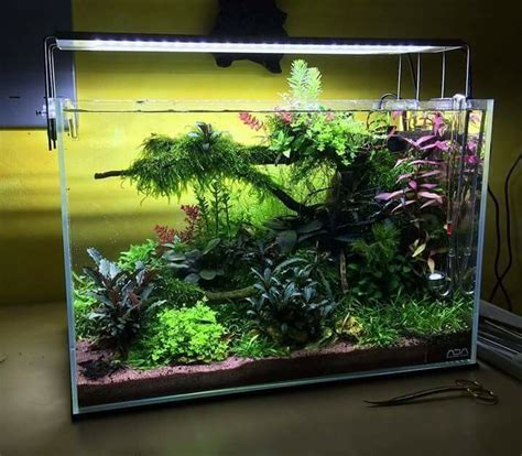 aquascape ideas tropical acuario plantado acuarios inspiraciones pinterest
