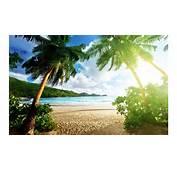 Beach Sunrise Nature 4K Wallpaper  Free