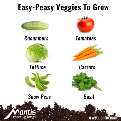 vegetables easy to grow what to grow in a garden home design ideas and pictures