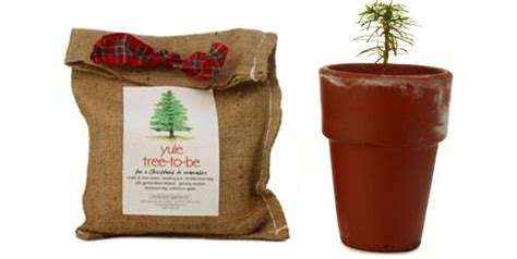 christmas tree grow kit a greener tree inhabitat green design innovation architecture green building