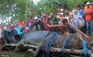 Much ado about biggest crocodile captured « Quierosaber's Blog