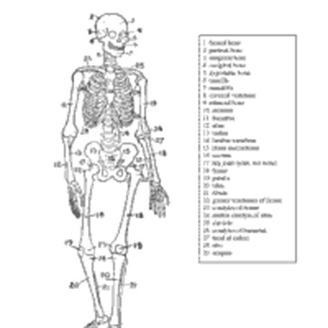 anatomy coloring pages skeleton anatomy 187 coloring pages 187 surfnetkids