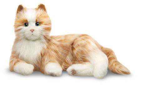 pet cat companion pet cats companion pet products