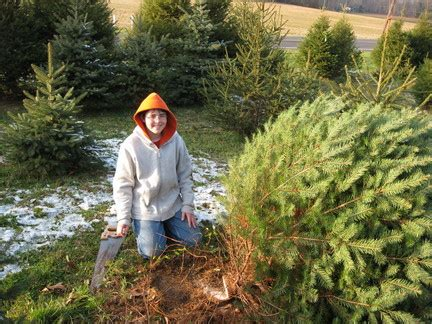 christmas tree farms in new jersey growing holiday