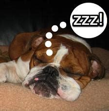 do dogs snore image gallery snoring dogs