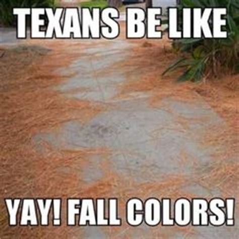 Texas Weather Meme - 1000 images about texas weather gotta luv it on