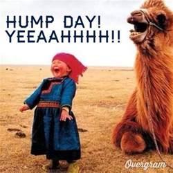 Meme Hump Day - wednesday work meme hump day yeeaahhhh picsmine