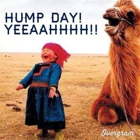 Funny Hump Day Memes - wednesday work meme hump day yeeaahhhh picsmine