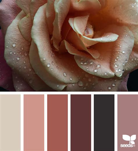 seeds color color dew design seeds