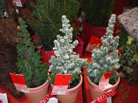 real christmas trees asda best 28 asda real trees trees shop george at asda real