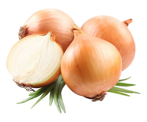 onion links 11 jpg yellow onion ecofruit