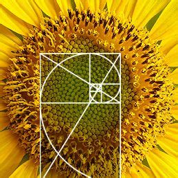 the golden section in nature 17 best images about fibonacci the golden mean on
