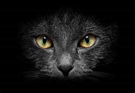 imágenes gato negro 201 rase un gato negro im 225 genes taringa