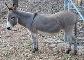 donkey shrek