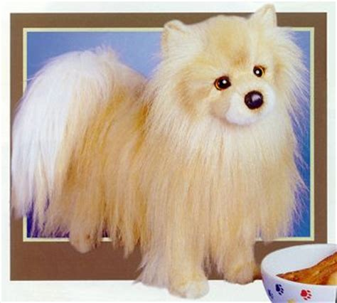 when do pomeranian puppies stop growing skin treatments your trusty guide to skin problems rachael edwards