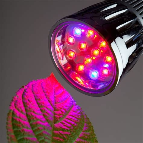 what are the best led grow lights 4 best led grow lights in 2018 for your house plants