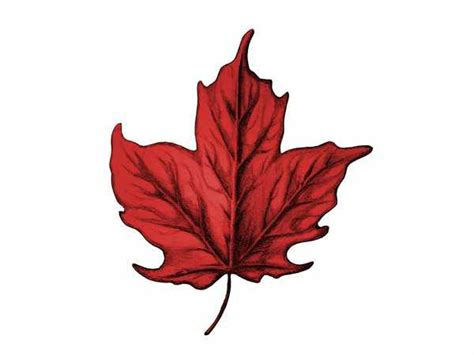 6 maple leaf tattoo designs and ideas