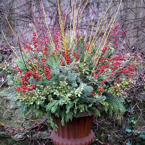 winter container gardens beautiful winter container it s beginning to look like