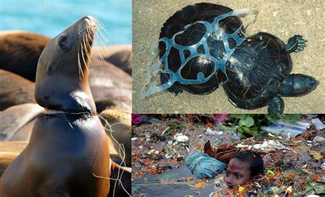imagenes impactantes de la contaminacion ambiental 10 fotos desgarradoras sobre la contaminaci 243 n que te har 225 n