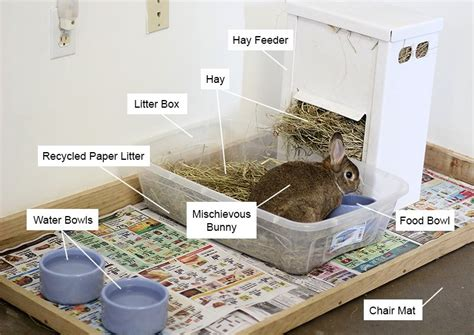 bunny area  litter box food dishes  hay feeder