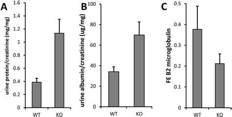 protein to creatinine ratio proteinuria in clic4 null mice a total protein to