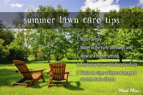 summer lawn care tips weed man on the lawn with weed man