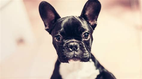 are for dogs 200 names that ll give your mini pup some serious swagger