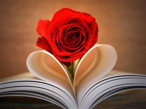 imagenes y rosas de amor fonditos rosa de amor flores rosas plantas