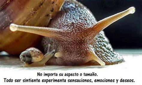 imagenes de animales moluscos filosof 237 a vegana los moluscos son seres sintientes