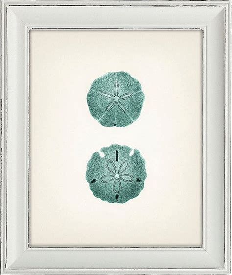 blue sand dollar 1 8x10 fine art print of a vintage