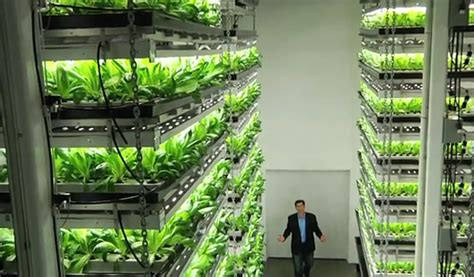 vertical farming viable agriculture  urban pipedream
